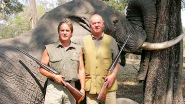 mataelefantes