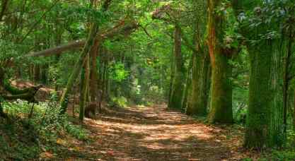 Bosque-Encantado-Alvaro-Purre